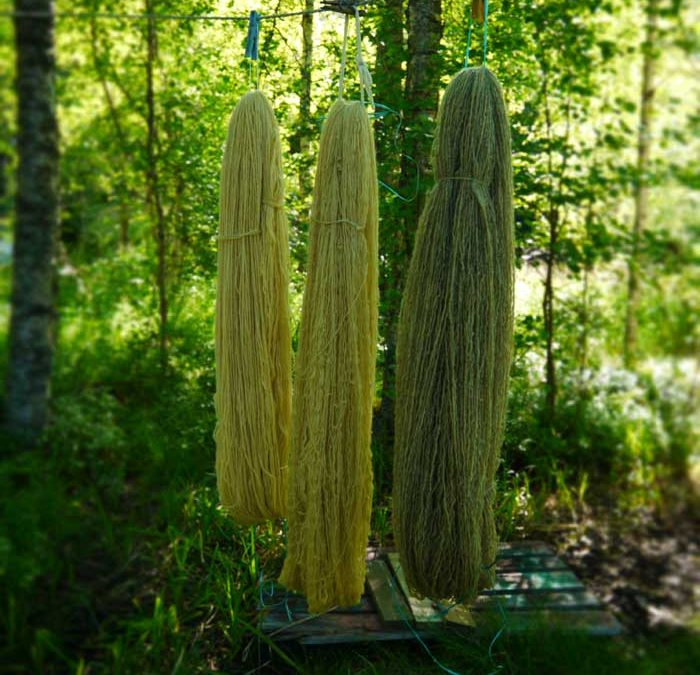 天然染料による糸染め:ルピナス
